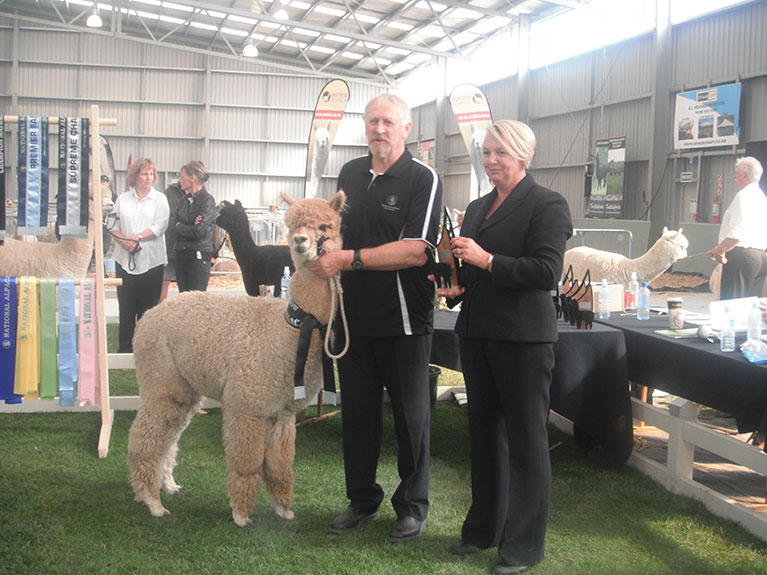 WF-Hat-Trick-wins-Champion-Adult-Male-at-2014-National-Show